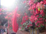 Blühender Busch im Sonnenlicht