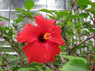 Blume im Gewächshaus