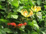 Blüten am Bachlauf