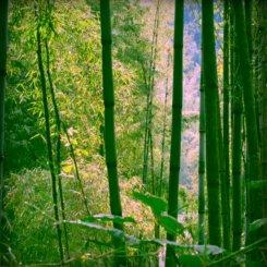 Im Bambuswald