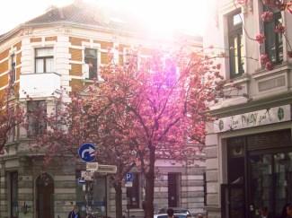 Pinke Lichterscheinung vor dem Pawlow