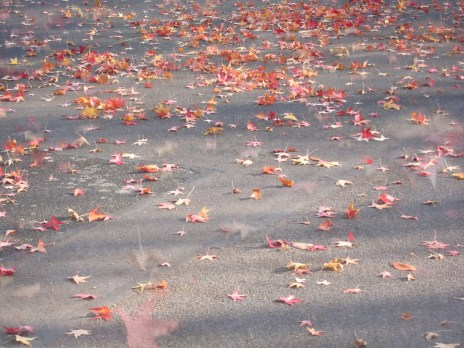 Tanzende Herbstblätter an der Rheinpromenade