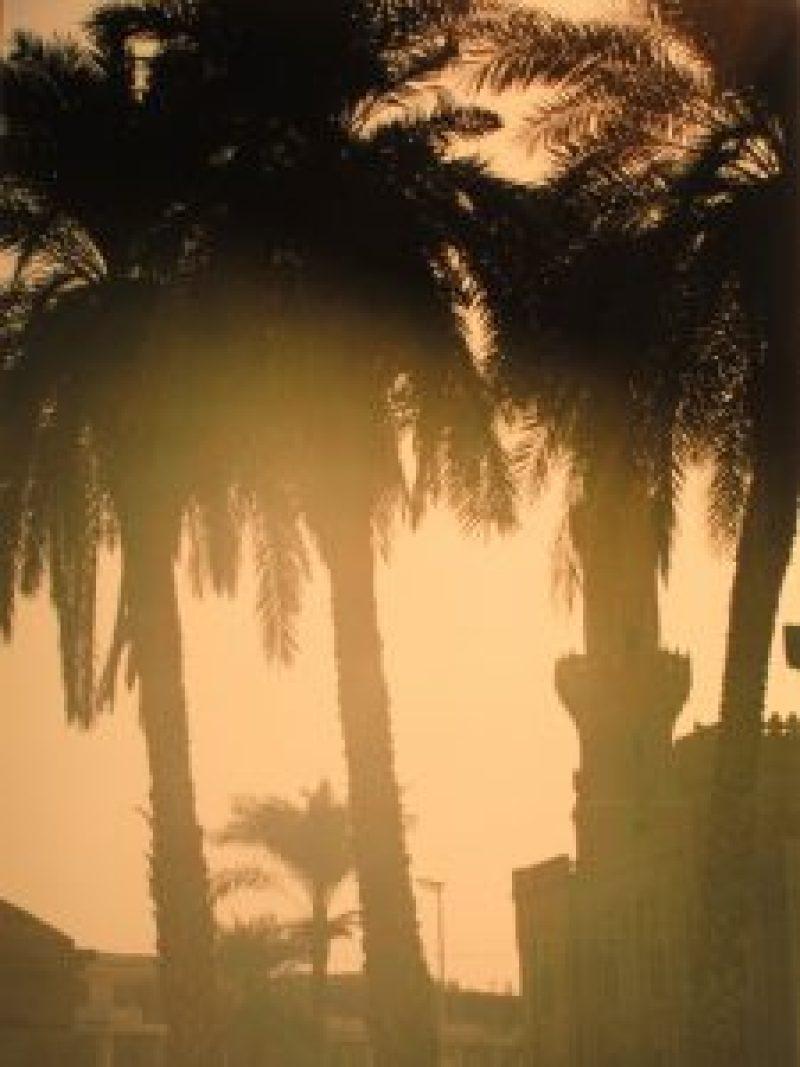 Palmen und Moschee im Gegenlicht