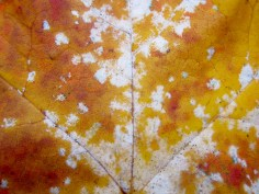 Herbstblatt III