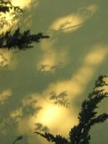 Schatten von Ästen II