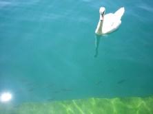 Sonniger Nachmittag am Zürichsee