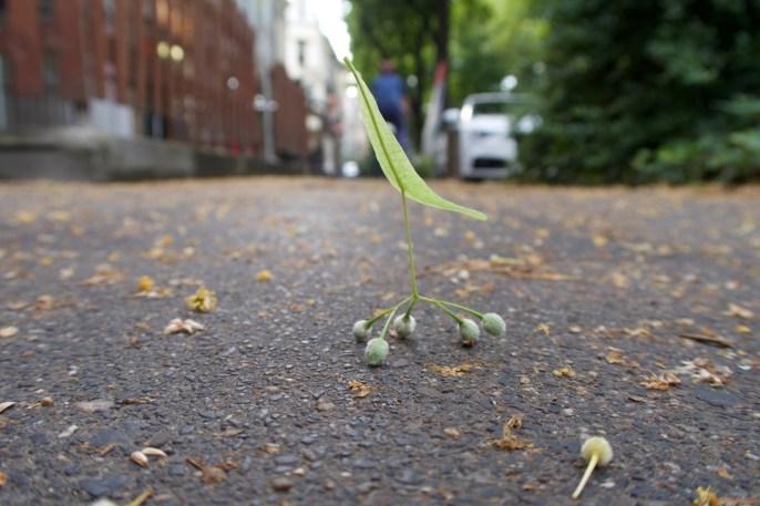 Gelandetes Flugobjekt auf der Kölnstraße