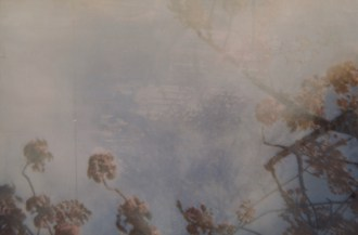 Kirschblüte - Nahaufnahme