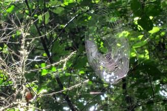 Spider net cloudforest ethiopia