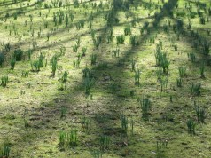 Green in March, Beginenhof