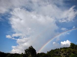 Ein Regenbogen über dem Wald in Kaffa während der Regenzeit
