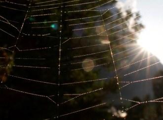 Makro Aufnahme von einem Spinnennetz im Morgenlicht. Man sieht die kleinen Tauperlen funkeln.