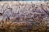 Muster von Würmern unter der Rinde eines alten, gefällten Baumes