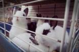 Kleine Kaninchen bei einer Zootierhandlung