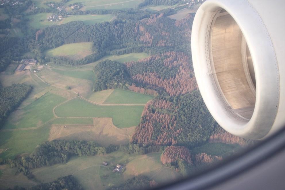Fliegt man im Sommer 2019 über Deutschland, sieht man in fast jeder bewaldeten Stelle große braune Flecken.