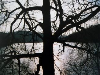 Ein Baum an der Urfttalsperre