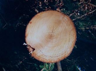 Jahresringe an einem gefällten Baum