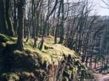 Ein Wald bei Einruhr in der Eifel