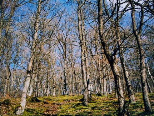 Heller Frühlingswald