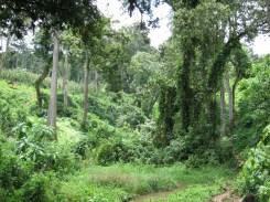 Auf dem Weg durch den Wald in Kaffa, Äthiopien
