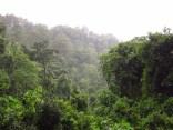 Der Wald in der Nähe von Bonga, Äthiopien