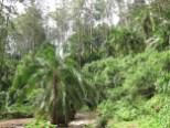 Wald am Fluss in Kaffa, Äthiopien