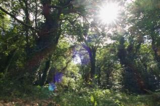 Sommerlicher Wald in Galizien, Spanien