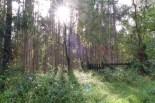 Eukalyptus wächst im Wald in Spanien