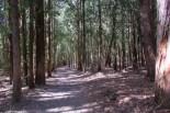 Sommerlicher Waldweg