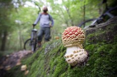 Ein Fliegenpilz beim Mountainbiken durch den Wald.
