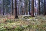 Waldboden beim ersten Frost im Herbst