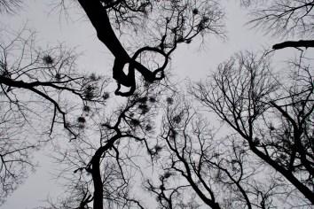 Blick in die Baumkronen im Winter