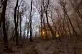 Ein Stadtwald im Dezember