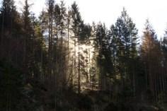 Abendsonne hinter den Bäumen in den Bergen
