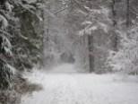 Ein verschneiter Waldweg