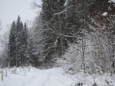 Dicker Schnee auf einem Waldweg in Süddeutschland
