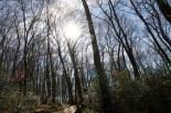 Erste warme Sonnenstrahlen im Wald