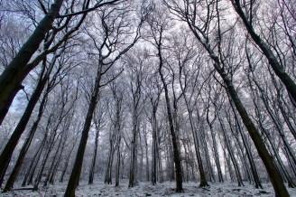 Schnee und Eis im Siebengebirge