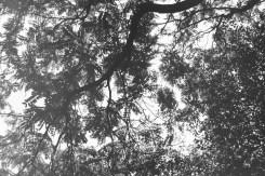 Blätterdach über dem Frankenbadplatz
