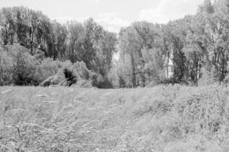 Um die Siegmündung ist ein wunderschönes Naturschutzgebiet