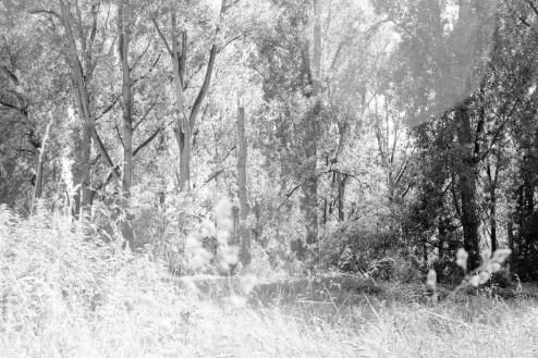 Alte Bäume und frisches Gras