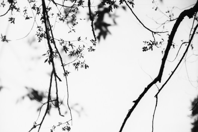 Zarte Zweige überm Fluss