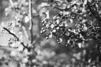 Pralle Beeren am Wegesrand