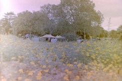 Flohmarkt in der Rheinaue - hinter gelben Blumen