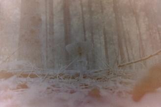 Pilz im Herbstwald