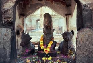 Blumen stibitzender Affe, Nandi im Virupaksha-Temple Hampi
