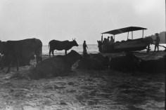 Frau, Boot und Kühe im Abendlicht am Strand von Palolem