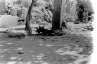 Ein Tier macht Päuschen im Schatten in Anegundi
