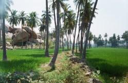 Reisfelder und Palmen bei Anegundi