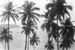 Sonnendurchfluteter Blick durch die Palmwipfel hoch über der Steilküste. Unterwegs auf der Küstenstraße in Goa